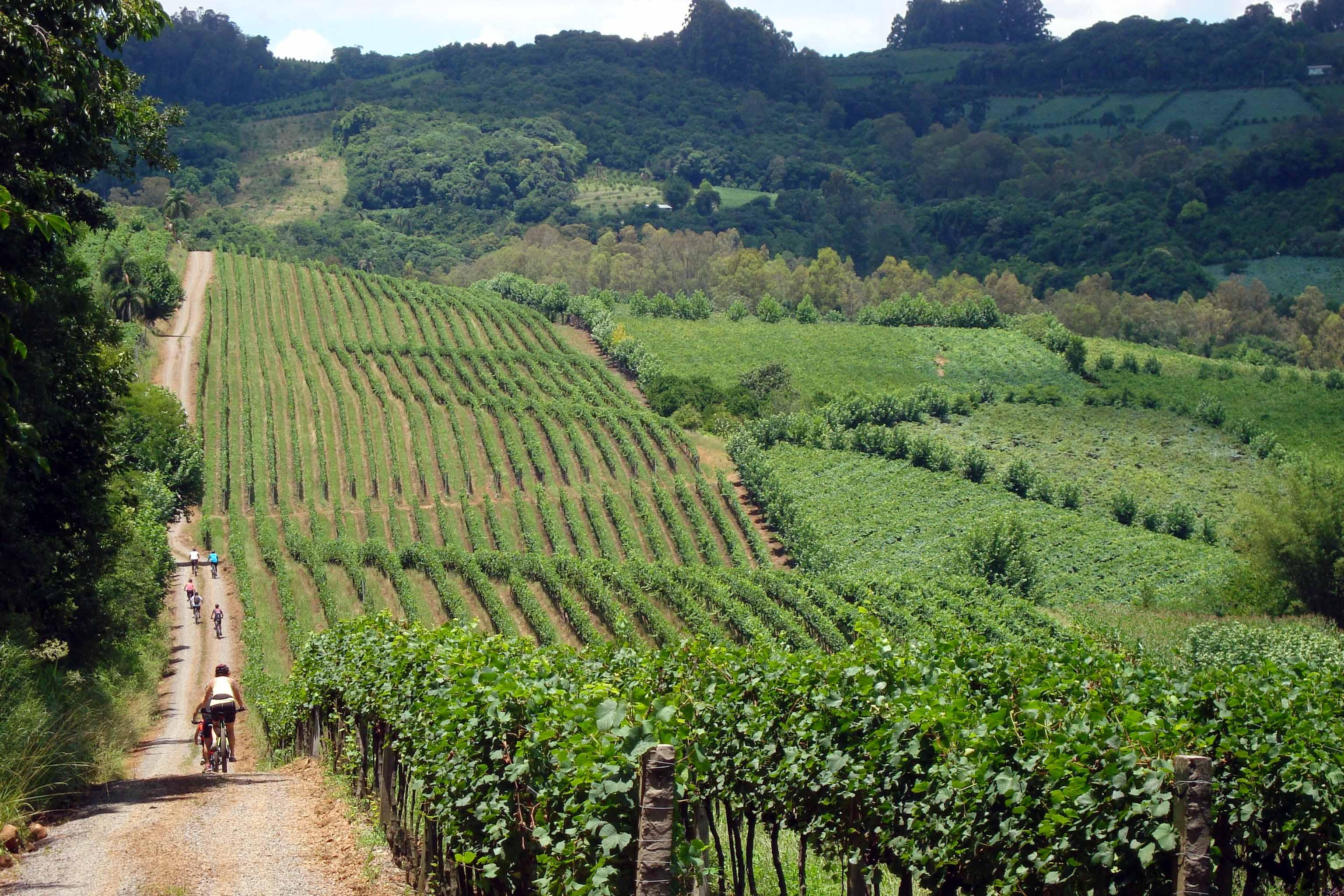 Parreirais da Serra Gaúcha, cenário do Wine Bike (Dall'Onder / Divulgação)