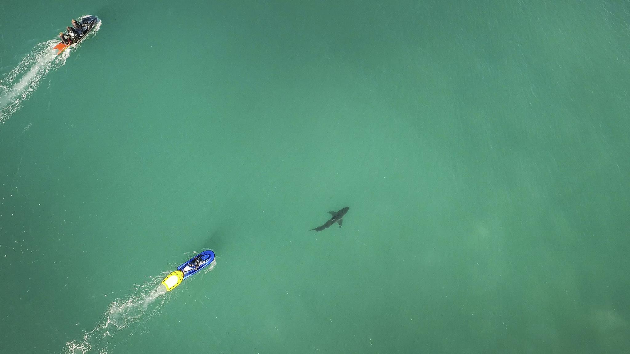 Tubarão na área (@WSL / Image Gumby