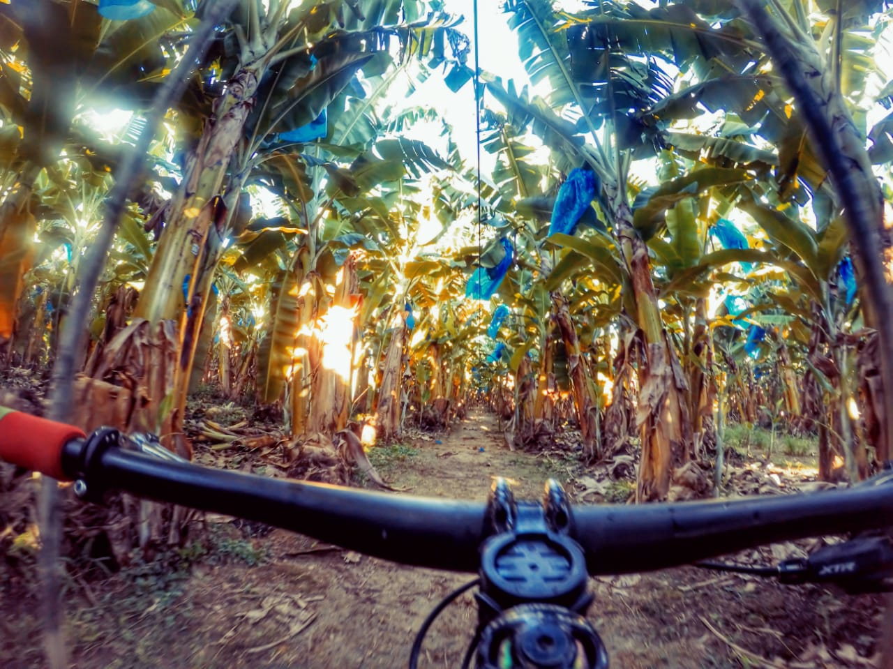(Divulgação / Brasil Ride)