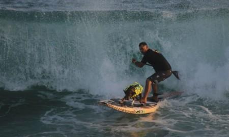 Cães surfistas estarão presentes no estadual de surfe realizado pela SPSurf, em Camburi