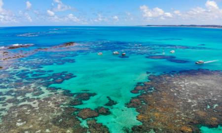 World Surf League escolhe SOS Mata Atlântica